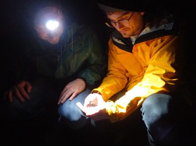 Salamander migrations with Ben Wyman and Kevin Duffy